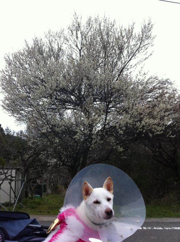 梅と犬さん
