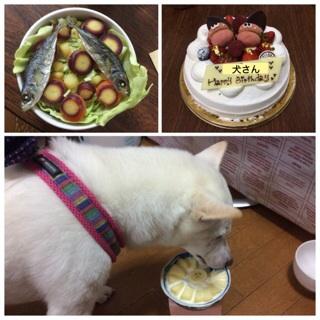 犬さんの誕生日